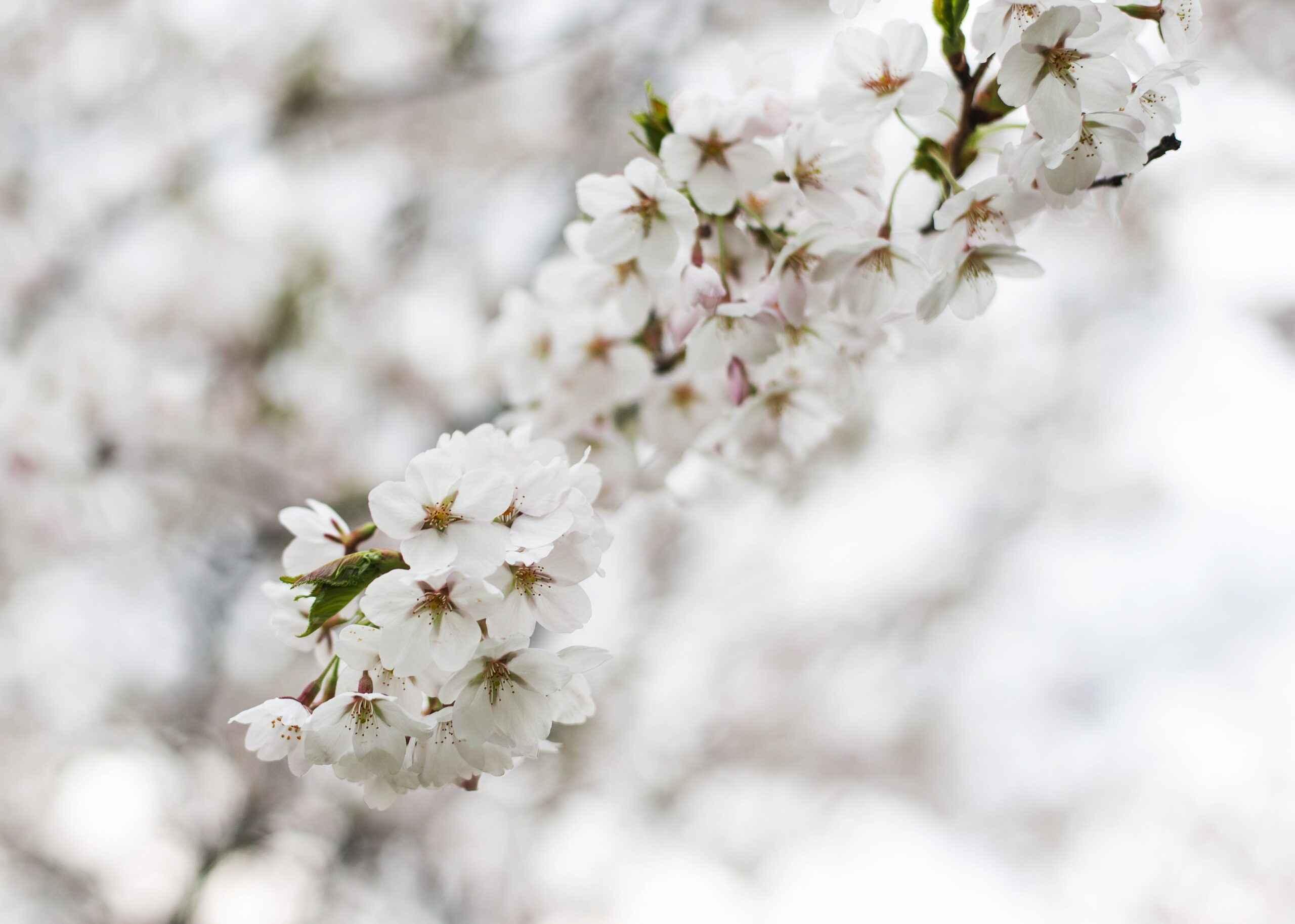 ¡Hola primavera!